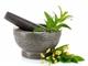 Травяные порошки для мытья тела