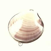 Кристалл свежести в розовой тихоокеанской раковине