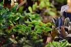 Справочник растений в аюрведе