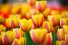 С праздником Весны, Красоты и Гармонии