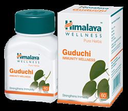 Guduchi (Гудучи) - эффективный иммуно-стимулятор и кровеочиститель - фото 6795