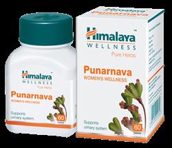 Punarnava (Пунарнава) - омолаживает весь организм, эффективно поддержит функцию почек - фото 6798