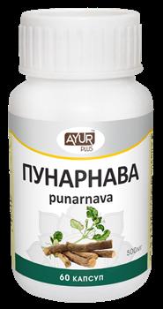 Пунарнава - тоник для почек и мочеполовой системы - фото 6957