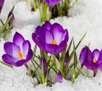 Вебинар «Здоровая весна с Аюрведой»